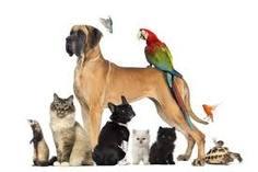 Partecipa alla Festa degli Animali