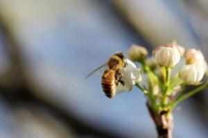 Al via gli incontri di apicoltura urbana. Diventa anche tu apicoltore.