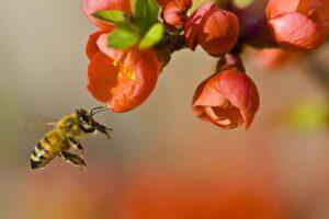 Mettiamoci al lavoro per le api