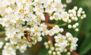 Le api hanno bisogno di noi. Mettiamoci al lavoro per loro.