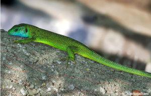 La biodiversità osservata dalle GEV lungo tutto il corso di un anno