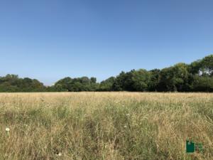Nuovi progetti di riqualificazione ambientale