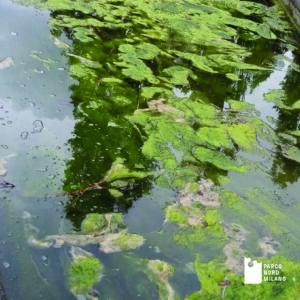 Rospo smeraldino nelle fontane del Parco