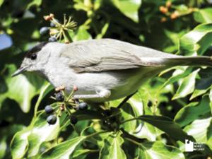 Tutela dell'avifauna dell'area disboscata