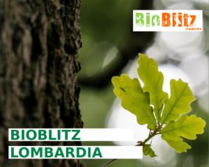 Torna il Bioblitz Lombardia