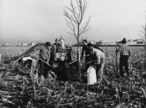 L'eredità di Ercole Ferrario a 100 anni dalla nascita: un ambientalista istituzionale