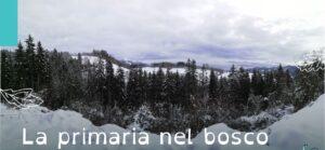 La primaria nel bosco