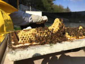 Il futuro del Pianeta: le api salvano l'umanità