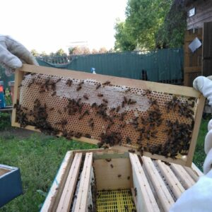 Introduzione all'apicoltura