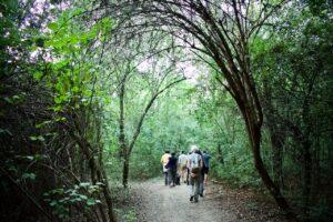 Noi siamo foresta: come entrare in relazione con gli alberi