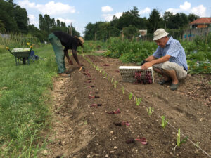 Incontri su orticoltura sostenibile